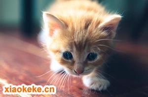 怎么判断猫咪发完情了