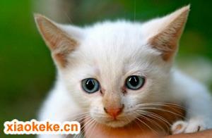 幼猫能吃什么