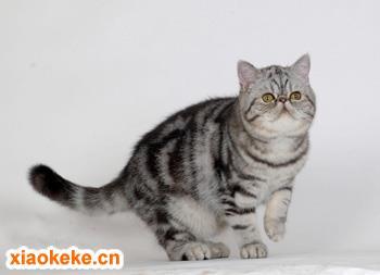 加菲猫图片