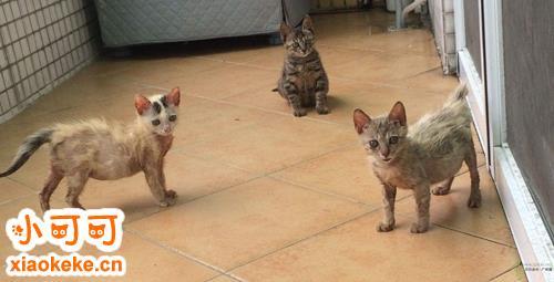 领养猫猫应做哪些准备 养猫前准备工作