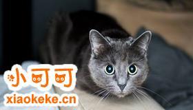 科拉特猫多少钱一只 科拉特猫价格