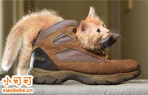 买猫注意哪些问题 买猫注意事项