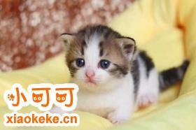 曼基康猫食道狭窄如何是好 食道狭窄症及治疗