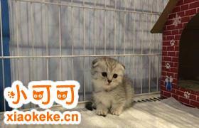 曼基康猫消化不良怎么治疗 曼基康猫消化不良治疗方法