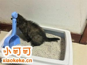 猫咪便秘怎么办 猫咪便秘解决办法