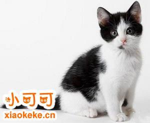 猫咪不同行为动作的需求和想法解析