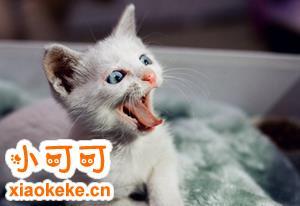 猫咪眼屎多怎么回事 猫咪眼屎多原因