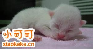 怎么辨别新生猫咪公母 猫咪雌雄辨别方法