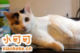 马恩岛猫怎么训练 马恩岛猫训练注意事项