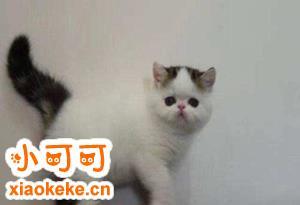加菲猫怎么训练 加菲猫训练诀窍