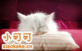 怎么训练波斯猫用猫砂 波斯猫训练原则