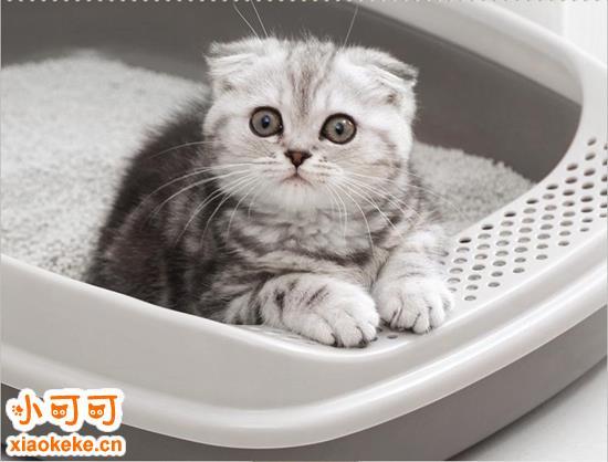 如何训练猫猫上厕所 居家干净猫猫训练方法