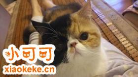 加菲猫乱撒尿怎么办 训练加菲猫不乱撒尿四个方法