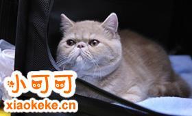 怎么训练加菲猫用马桶 加菲猫上厕所训练