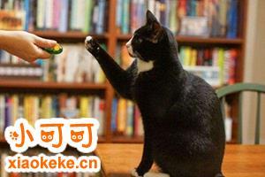 怎么训练猫不咬人 调教猫咪不再咬人方法