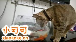 怎么训练猫咪不喝脏水 改变猫咪喝脏水习惯方法