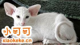 如何训练东方猫睡在固定地方 东方猫睡觉训练
