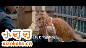怎么训练猫击掌 猫咪击掌调教视频分享