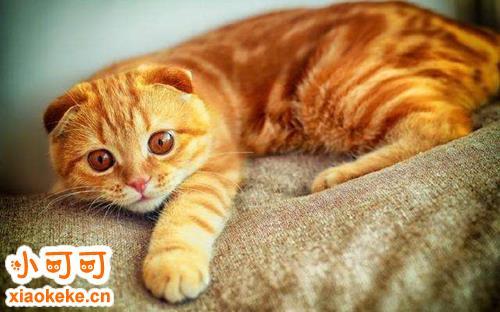 猫咪不听话怎么办 教你两招让猫听话