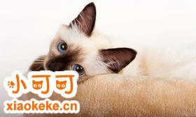如何训练欧洲缅甸猫 欧洲缅甸猫训练注意事项