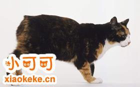 马恩岛猫会自己上厕所吗 猫咪上厕所训练