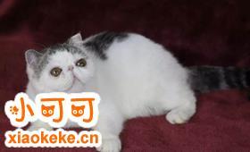 加菲猫训练技巧视频