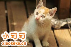 猫猫到处拉尿怎么办