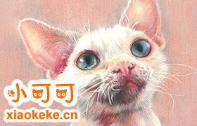 德文卷毛猫很凶怎么办 温柔猫咪养成法