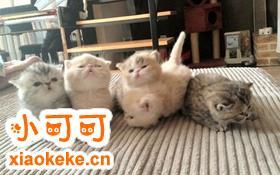 如何训练加菲猫不钻被窝 宠物猫不钻被窝的方法