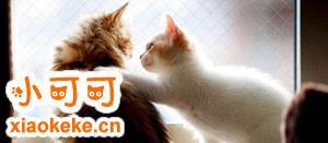 怎么训练猫上马桶 猫咪马桶训练