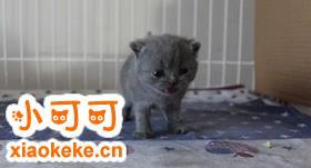 如何训练俄罗斯蓝猫用马桶 蓝猫用马桶指南