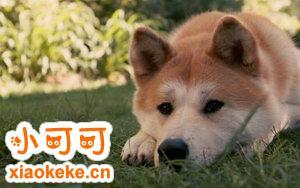 秋田幼犬得了细小怎么办 秋田幼犬得了细小治疗方法