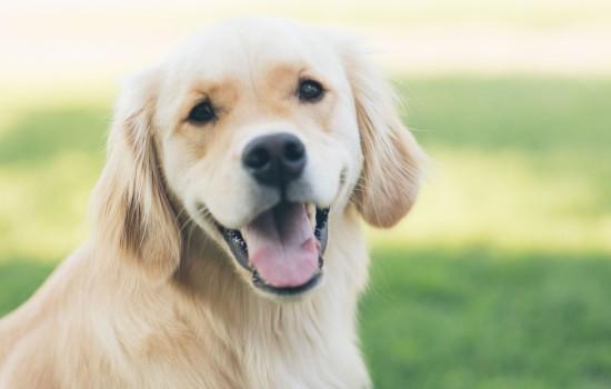 狗狗可以吃菠菜吗