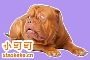 波尔多犬吃什么