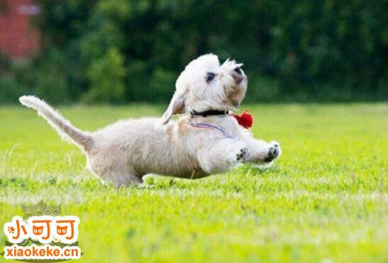幼犬性格怎么测试 幼犬性格测试方法1