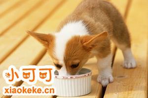 自制狗粮有什么优点