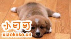 幼犬怎么吃狗粮 一两个月的幼犬怎么喂养手册
