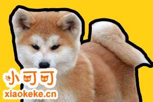 秋田幼犬喂养注意事项有哪些