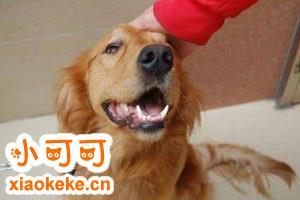 狗狗牙齿黄怎么办 狗狗牙齿清洁护理方法