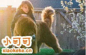 纽芬兰犬怎么训练 纽芬兰犬训练教程