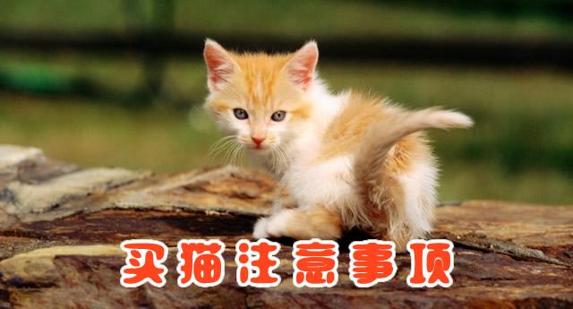 领养猫猫准备工作